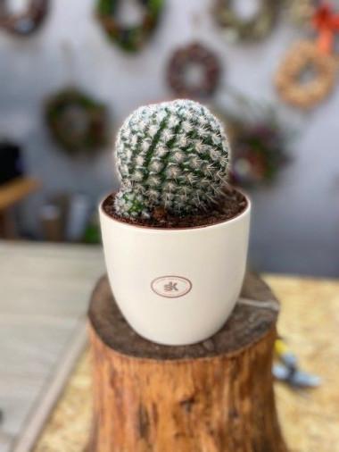 Kaktus s květináčem 1