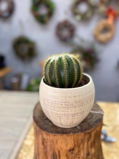 Kaktus s květináčem 2